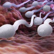 افزایش تعداد اسپرم